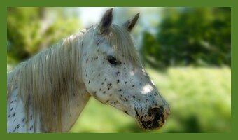 Pferd Nebenberuf kein Hexenwerk