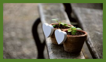 mehr teilzeit selbstaendigkeit pflanzen toepfe